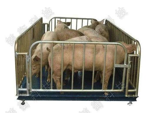 动物地磅秤